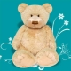 Georgie Bear Large GNRL10 23