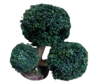 Natural Dry Bonsai Tree